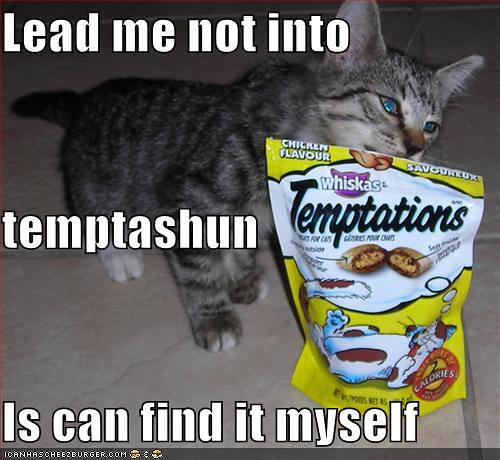 funny-pictures-cat-can-find-temptation-himself