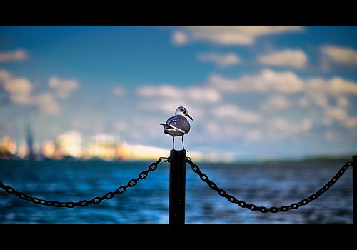 landscape pier 3d miami seagull rental frontpage canonef85mmf12liiusm canoneos5dmarkii abigfish