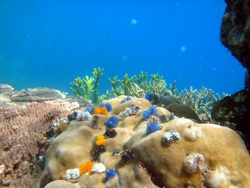 under pulau redang terengganu sea