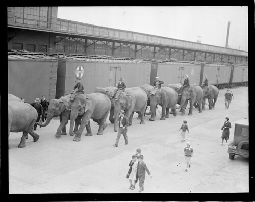 Circus comes to town - elephants on Atlantic Ave.