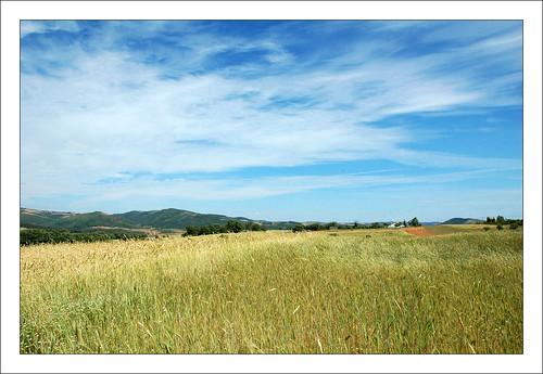 blue sky portugal field azul rural landscape paisagem céu dourado campo passeio trigo trásosmontes bragança