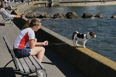 Oriental Bay dog