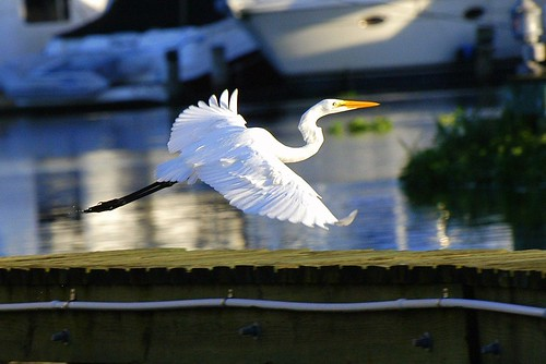 white bird water nikon florida flight sunny d100 deland
