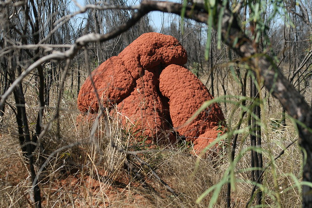 Termite mound - Broome
