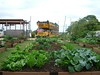 TheWhoFarm Jones Valley Urban Farm Birmingham AL by thewhofarm