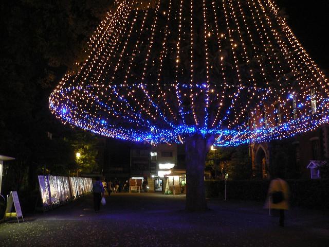 同志社クリスマスツリー