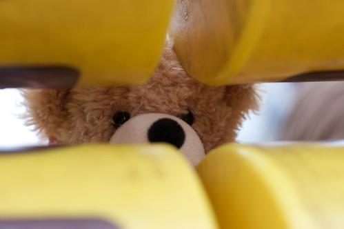 Teddy hiding at the play park