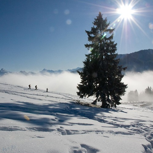 winter tree fog clouds weihnachten geotagged schweiz switzerland nebel wolken sonne baum wanderer tanne sarnen obwalden langis peekm schneeschnuh