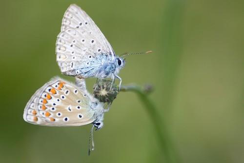 Le papillon - The butterfly