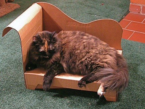 Cardboard cat chaise evil mad scientist laboratories for Cat chaise longue