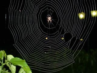 Spider@Web