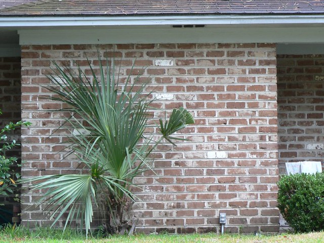 Image Result For Brick Mortar Colors