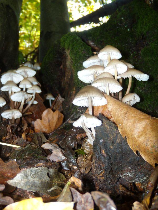 Busby Berkely's mushroom musical Here's the chorus line, dancing down the stairs. Sevenoaks Circular