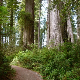 Lady Bird Johnson Grove, Redwoods NP