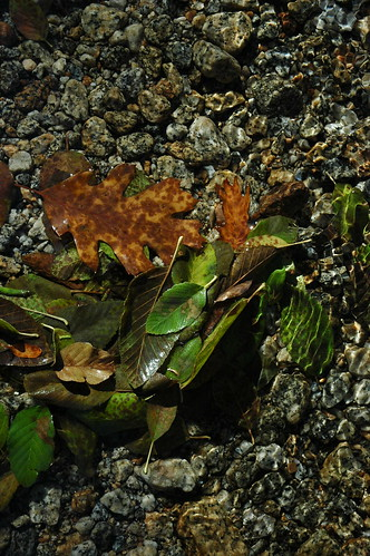 Leaves in stream, granite rock, Yosemite National Park, California, USA by Wonderlane
