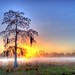Misty Sunrise with Tree by Duncan Rawlinson - Duncan.co - @thelastminute