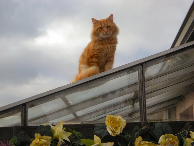 Fluffy- Kitten on nexts doors conservatory roof!