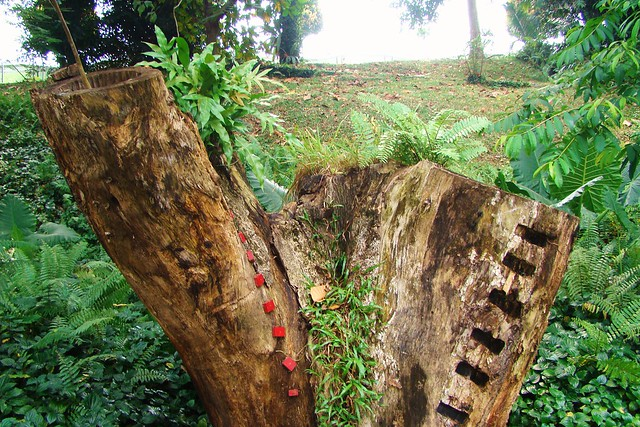 shape Tree   It's done by some famous people for some even ...: www.flickr.com/photos/51048079@N00/2290444907