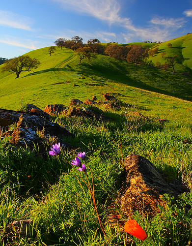 wildflowers and hills