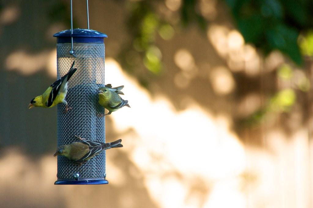Bird Feeder 2