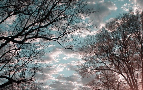 pictures desktop pink trees sunset shadow wallpaper sky color colour colors silhouette clouds creativity photo skies colours image screensaver crystal photos turquoise unique background widescreen creative picture images christian creation backgrounds writer write create wallpapers capture silhouetted desktopwallpaper screensavers irfanview 1610 1440x900 writes 1680 1680x1050 desktopwallpapers widescreenwallpaper 10millionphotos turquoisesky crystalwriter christianwriter 1610aspectratio