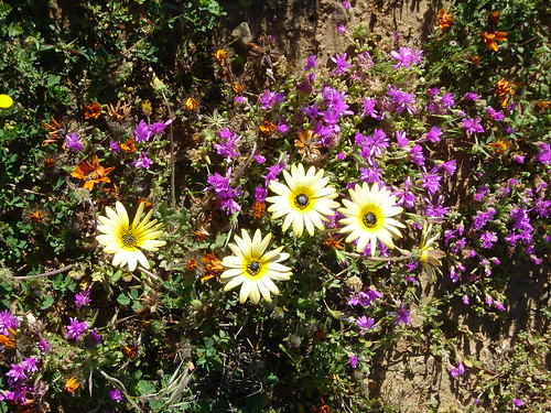 flower tour 2005 (4) - Namaqualand Wild Flower Tours, South Africa - Gerald Crawford