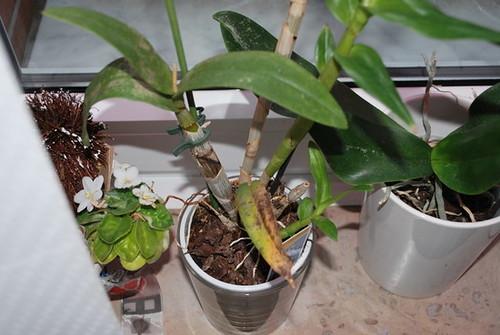 meine pflanzen haben weisse und braune stellen pilze. Black Bedroom Furniture Sets. Home Design Ideas