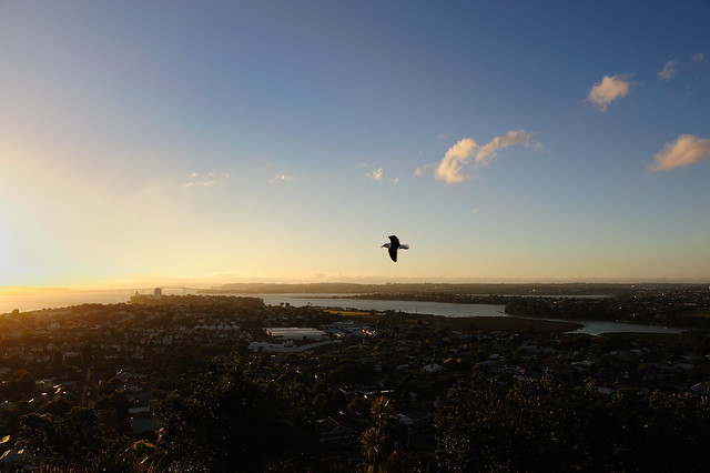 Sea-gull, Devenport, Waitemata Harbour and Harbour Bridge from Mount Victoria at Sunset