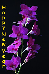cattleya labiata(0.0), laelia(0.0), cattleya trianae(0.0), pink(0.0), flower(1.0), purple(1.0), violet(1.0), plant(1.0), lilac(1.0), macro photography(1.0), phalaenopsis equestris(1.0), flora(1.0), petal(1.0),