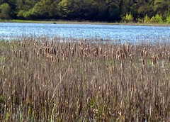 tundra(0.0), phragmites(0.0), fen(1.0), nature reserve(1.0), wetland(1.0), floodplain(1.0), prairie(1.0), field(1.0), grass(1.0), lake(1.0), natural environment(1.0), meadow(1.0), salt marsh(1.0), grassland(1.0), pond(1.0), bog(1.0),