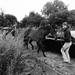 Evacuating the horses..  by vintagedept