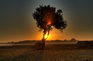 Sunset Through A Tree | by Pascal Hertleif