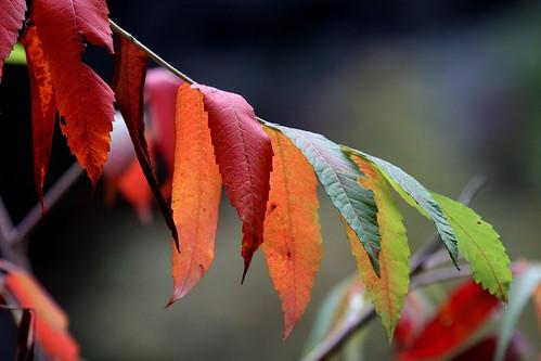 Road tour fall foliage