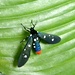 Polka-Dot Wasp Moth - Photo (c) readerwalker, some rights reserved (CC BY-NC-SA)