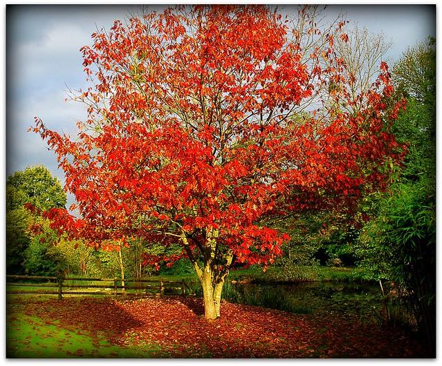 Et indien en haute bretagne a gallery on flickr for Quel arbre pour mon jardin
