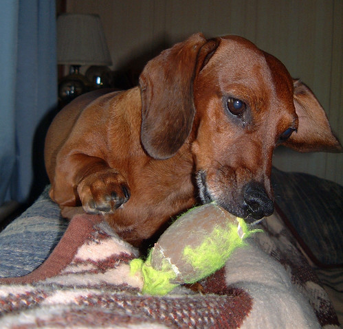 2006-09-19 - DogTimesFive-0051