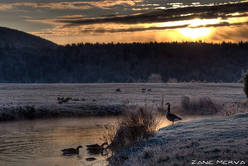 new morning cold nature water fog sunrise landscape frost cloudy hampshire canadian goose hdr zanemerva