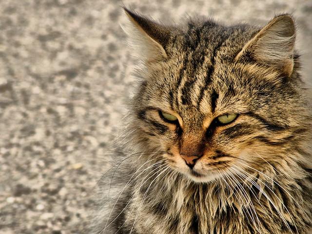 Cat ALEMDAR