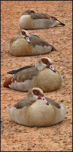I got my ducks in a row