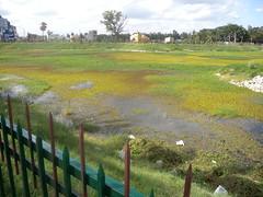 Puttenahalli: one of Bengaluru's urban lakes