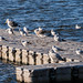 Edg_Res_Birds-13.jpg