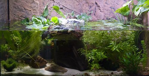 turtle tank schildkr tenaquarium a photo on flickriver. Black Bedroom Furniture Sets. Home Design Ideas