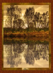 Cannock reflections