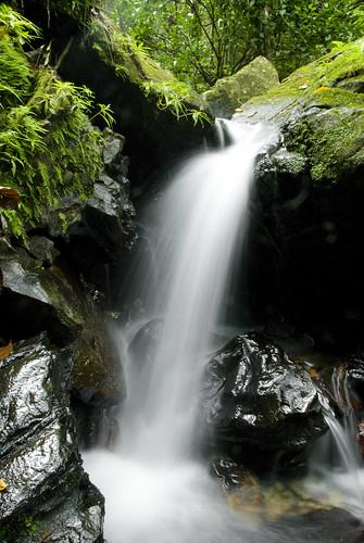 white green wet water rain forest flow waterfall moss rainforest rocks stream puertorico el brook slippery damp yunque jamesogorman platinumphoto