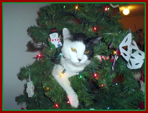 pj in the christmas tree 2