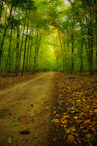 road autumn green fall leaves drive lime twotrack parh