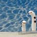 garden eels glasswork by klee@underwater