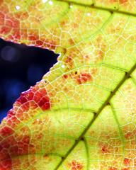 Neon Maple leaf