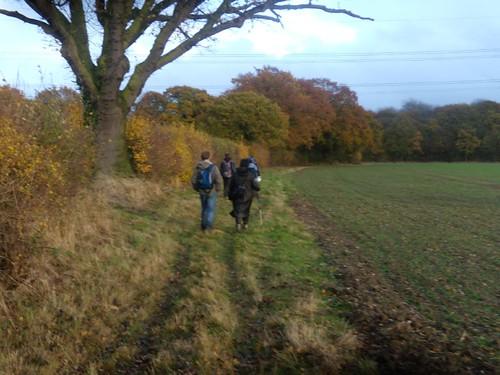 along a hedgerow