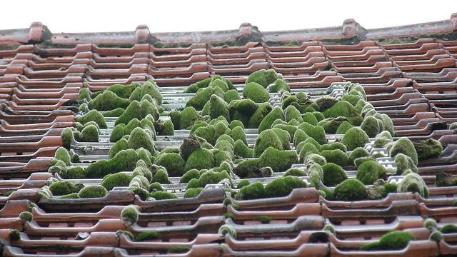 Petit jardin zen de toit zen little roof garden c 39 est Petit jardin zen